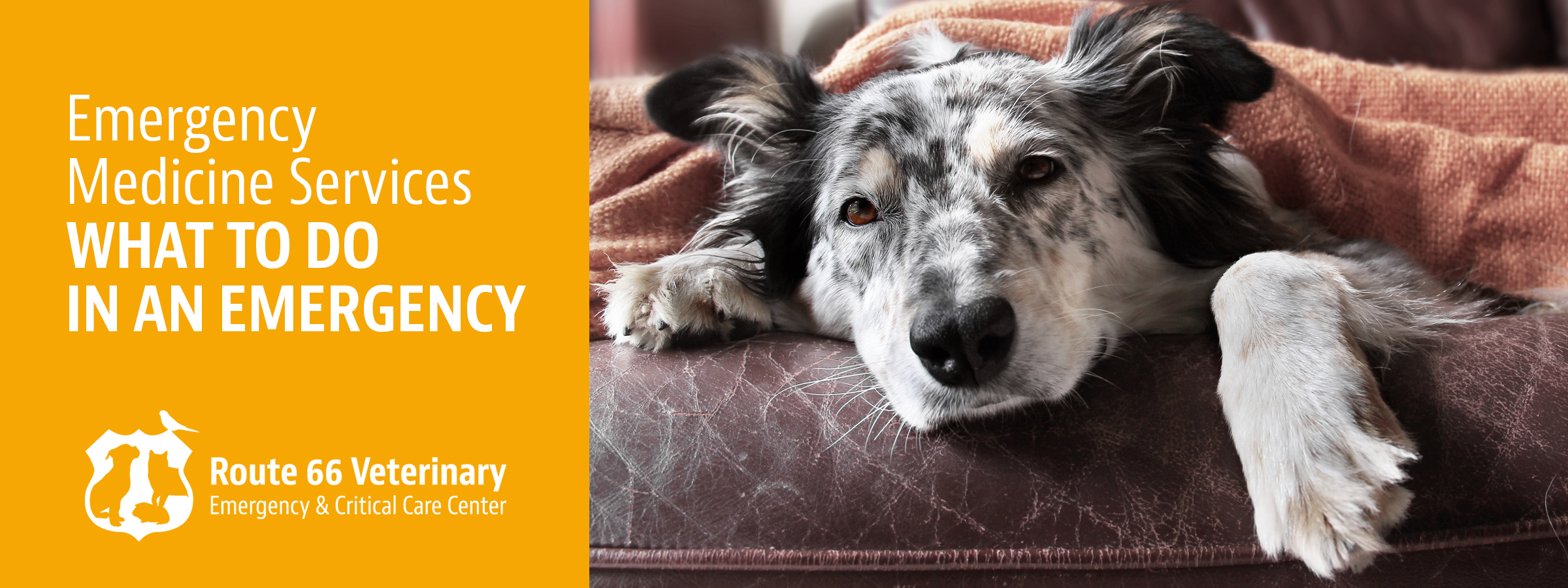 what-to-do-in-a-pet-health-emergency